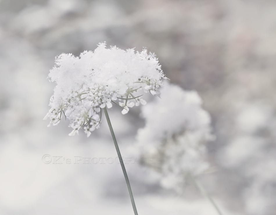 So faithful through all seasons of life.