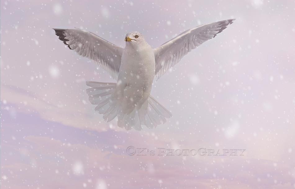 _DSC0062 3 sky snow